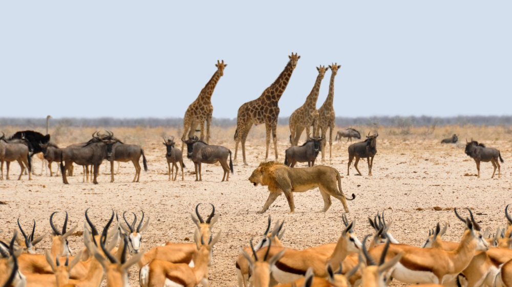 africa-1170179