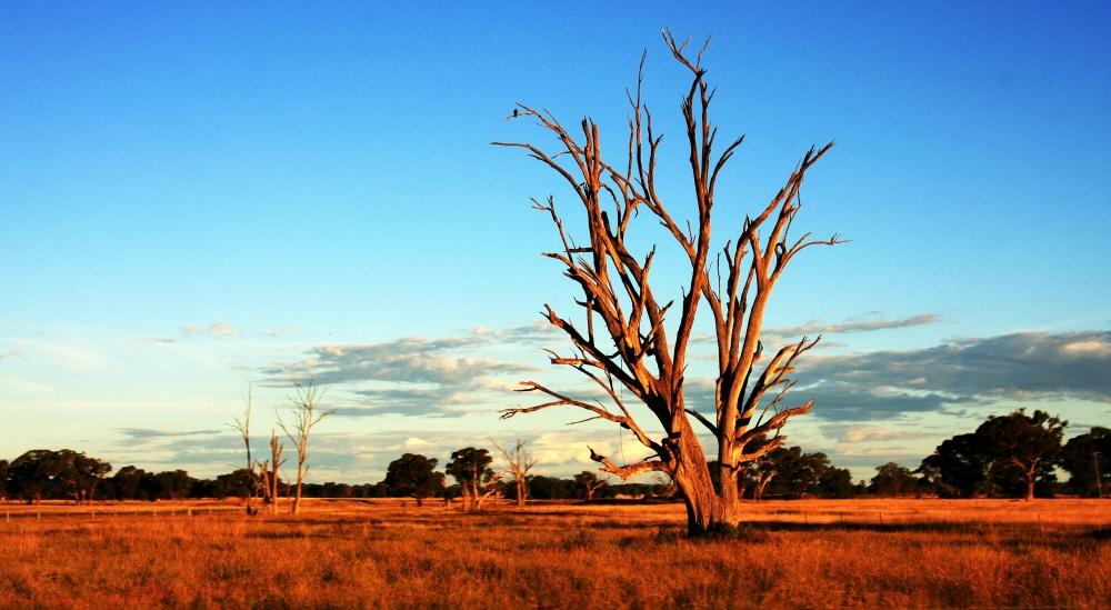 tree-392068