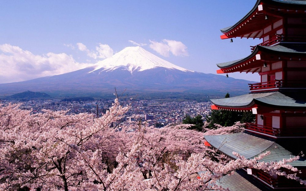 Cherry_blossoms_and_mount_Fuji___Japan_2560x1600